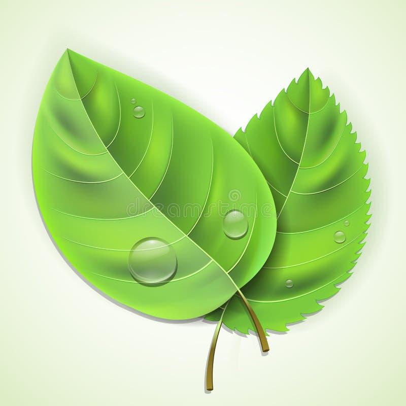 Frische Grünblätter vektor abbildung