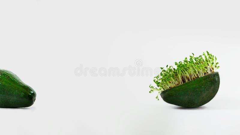Frische grüne Brunnenkresse in Avocadooberteil und in Avocado n die andere Seite des weißen leeren Hintergrundes, lokalisiert auf stockfotos