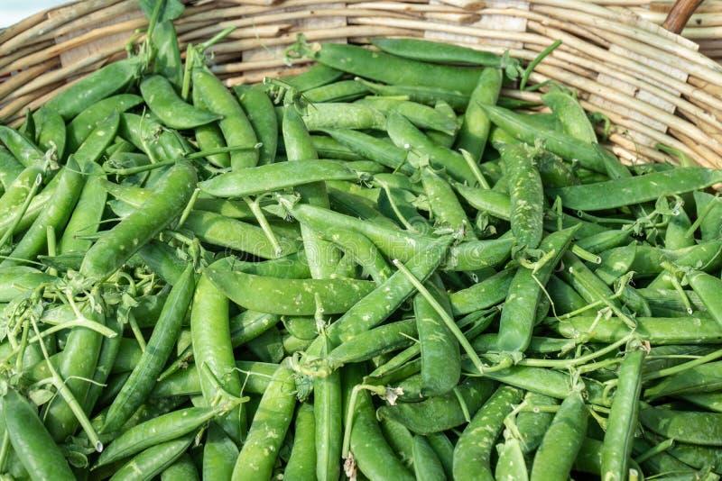 Frische grüne Erbsen auf Korb für Verkauf auf Landwirtmarkt lizenzfreie stockfotografie