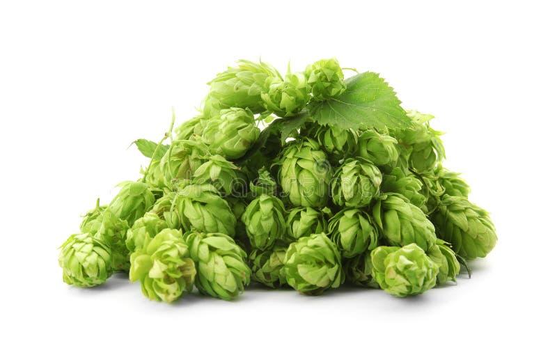 Frische grüne Hopfen auf weißem Hintergrund lizenzfreie stockfotografie