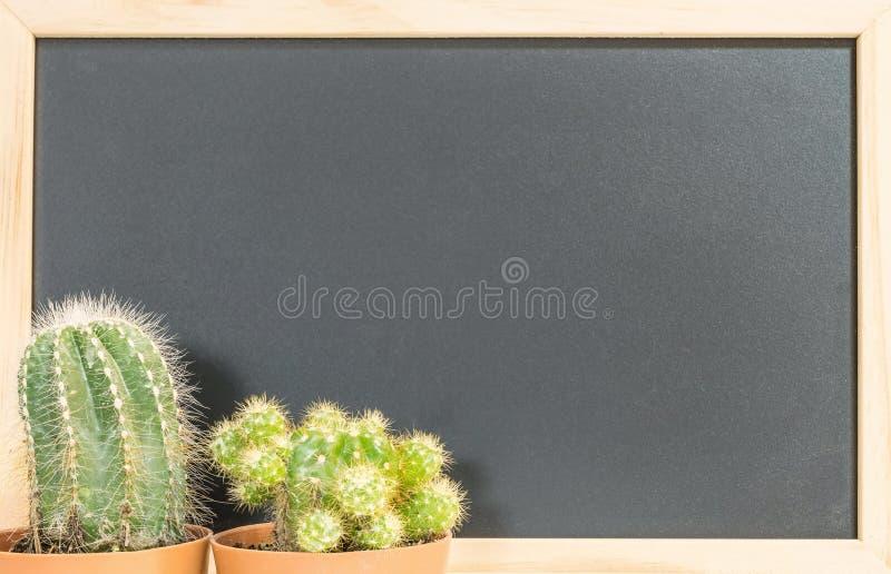 Frische grüne Kaktuspflanze der Nahaufnahme auf unscharfer Tafel maserte Hintergrund mit Kopienraum stockfotografie