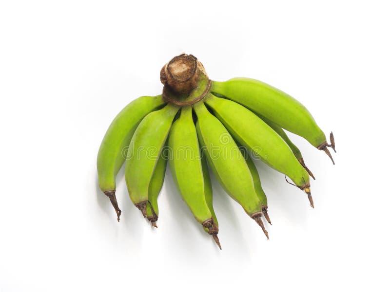 Frische grüne Lebmuernang-Bananen lokalisiert auf weißem Hintergrund Lebmuernang-Banane ist kleine Banane in Thailand stockfotografie