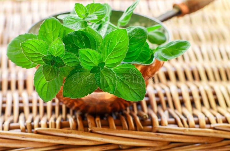 Frische grüne organische Zweige der Minze pfefferminz lizenzfreie stockbilder