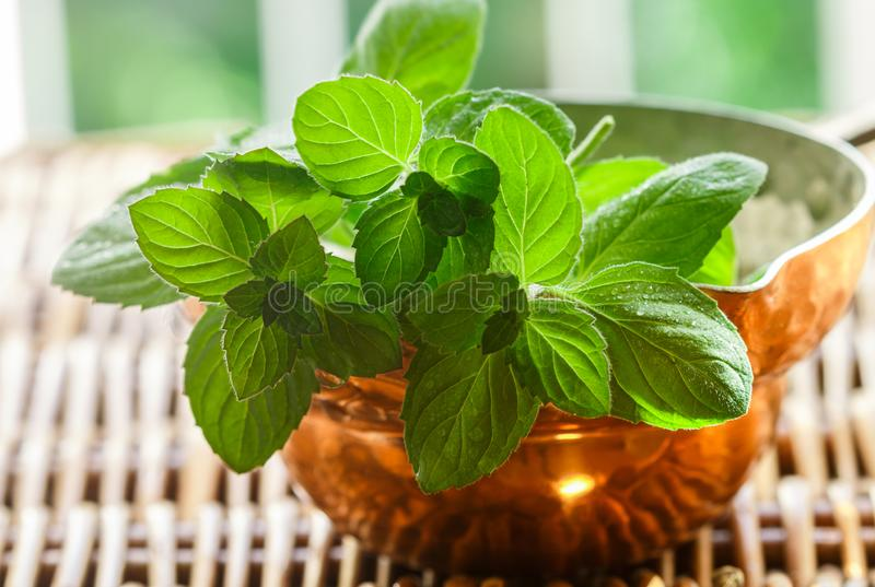 Frische grüne organische Zweige der Minze pfefferminz lizenzfreie stockfotografie