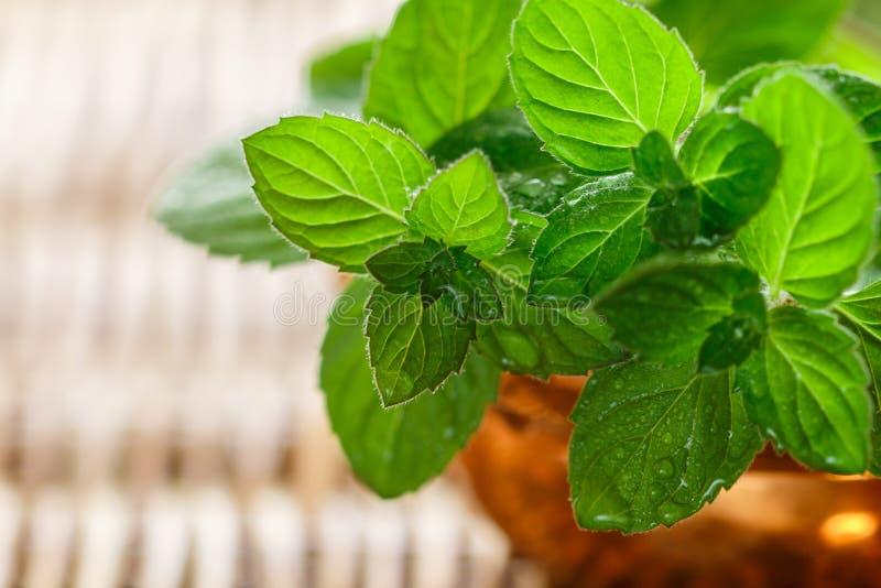 Frische grüne organische Zweige der Minze pfefferminz W?rzige Kr?uter stockfotografie