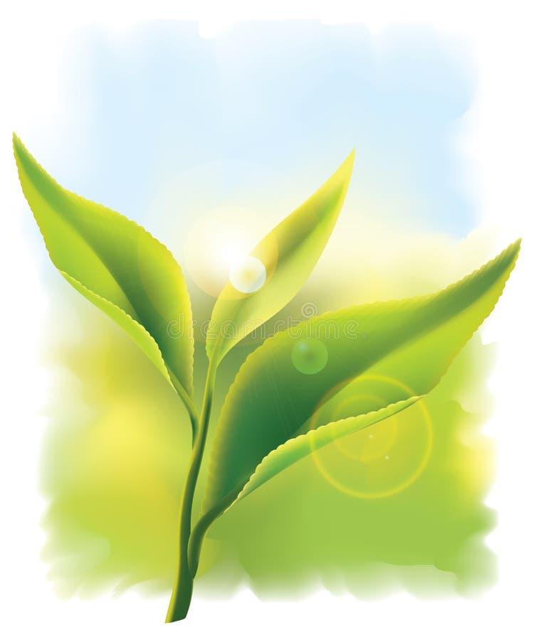 Frische grüne Teeblätter in den Strahlen der Sonne. stock abbildung