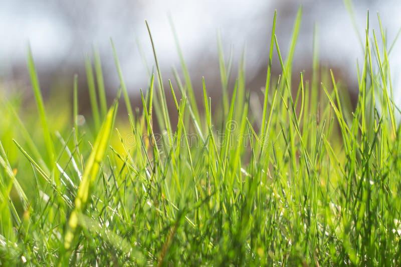 Frische Grüngrasen, hell beleuchtet Nahaufnahme lizenzfreie stockfotos