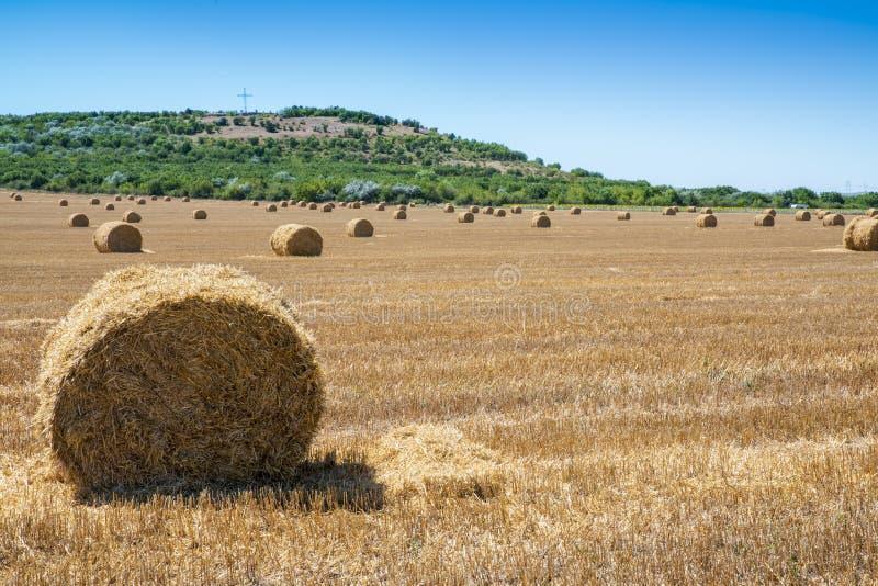 Frische Heuballen auf Feld während der Sommerzeit stockfoto