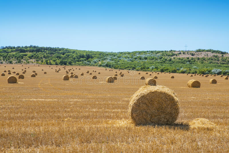 Frische Heuballen auf Feld während der Sommerzeit stockfotos