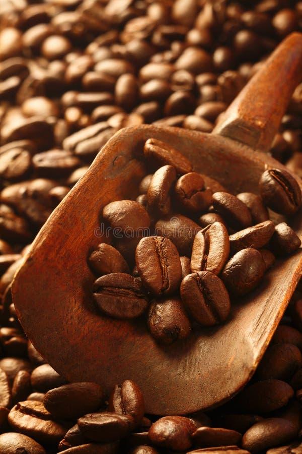 Frische Kaffeebohnen, ein wertvolles Gebrauchsgut stockbild