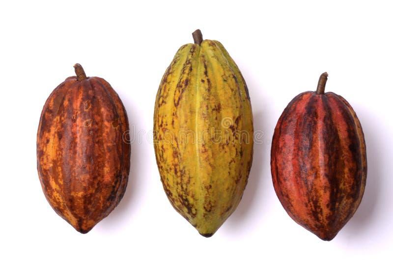 Frische Kakaofrüchte lizenzfreies stockfoto
