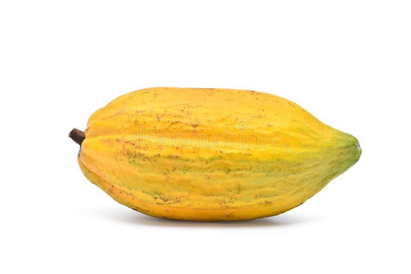 Frische Kakaofrüchte lokalisiert auf Weiß lizenzfreies stockbild