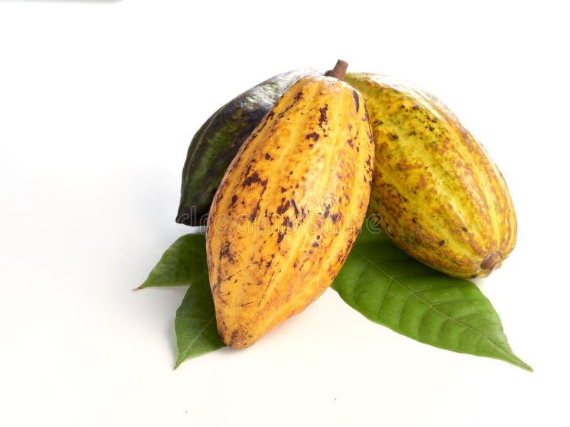 Frische Kakaofr?chte mit gr?nem Blatt lizenzfreie stockbilder