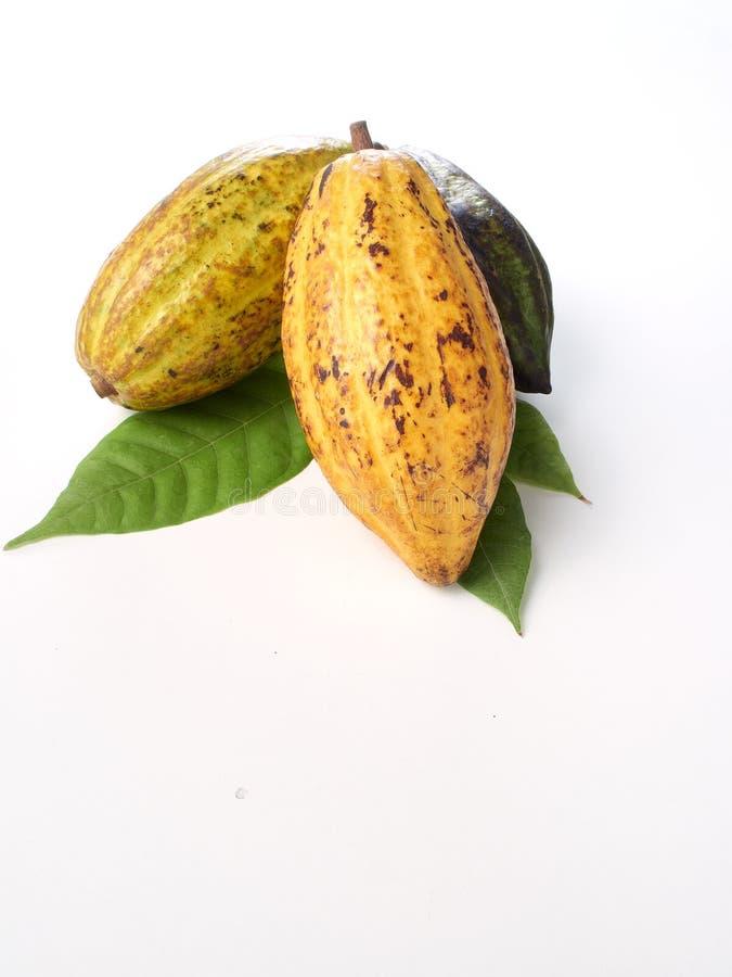 Frische Kakaofr?chte mit gr?nem Blatt lizenzfreie stockfotos