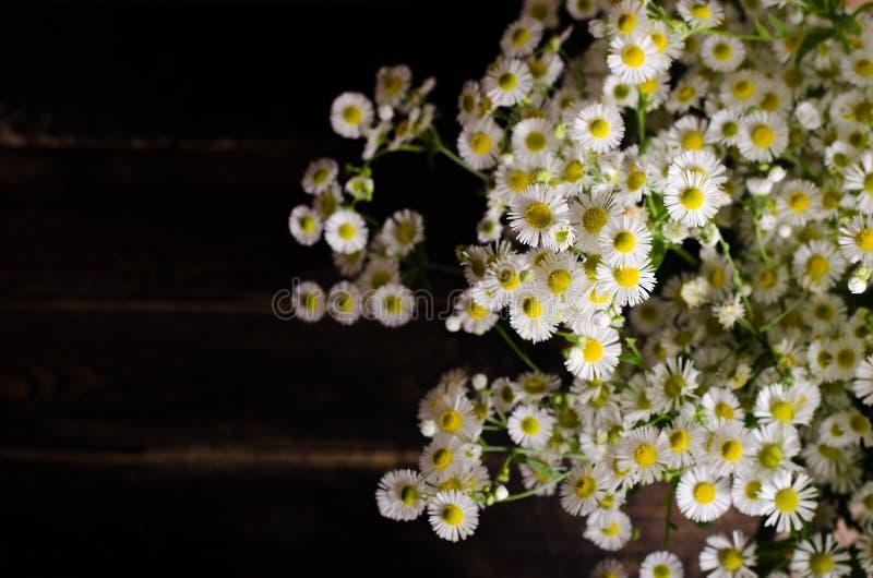 Frische Kamillenblumen auf braunem hölzernem Hintergrund Freier Platz für Ihren Text stockfoto