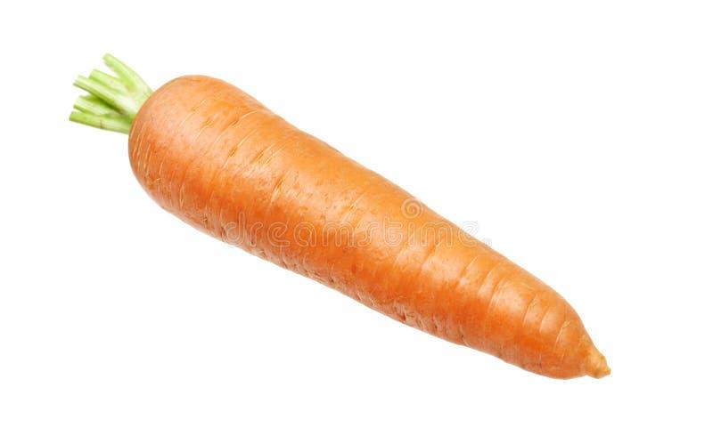 Frische Karotte stockbild