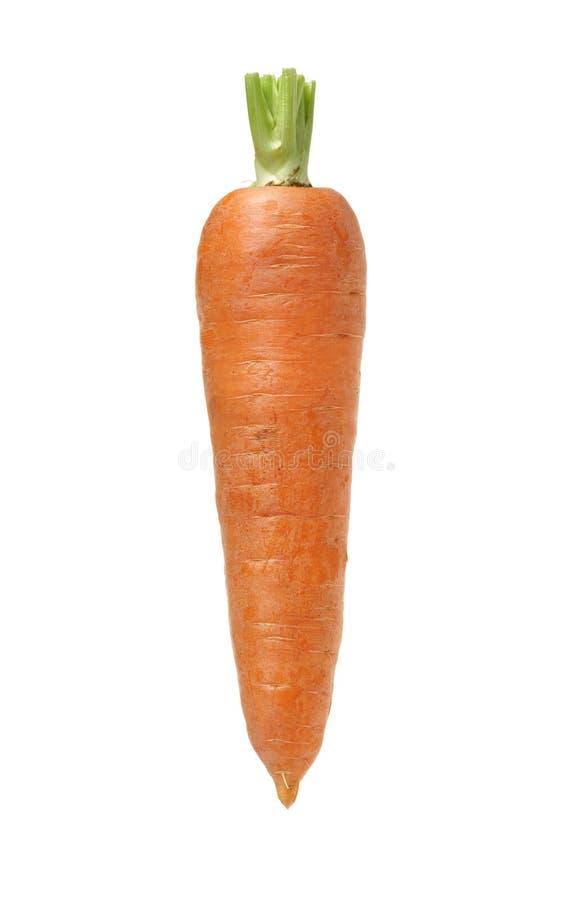 Frische Karotte lizenzfreies stockbild