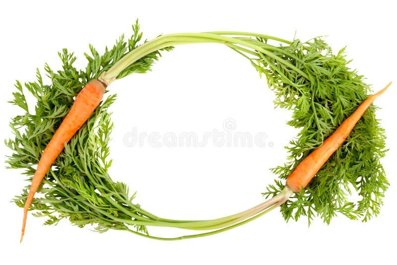 Frische Karotte auf weißem Hintergrund stockfoto