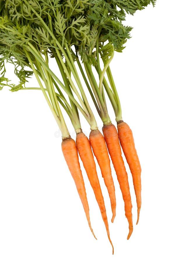 Frische Karotte auf weißem Hintergrund stockbilder