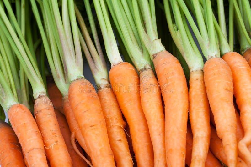 Frische Karotte auf weißem Hintergrund lizenzfreies stockbild