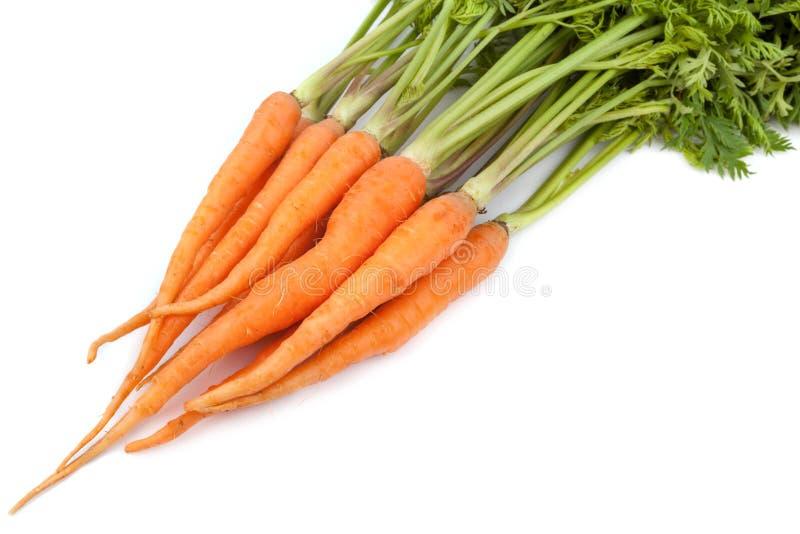 Frische Karotte auf weißem Hintergrund lizenzfreie stockfotos
