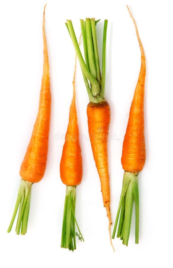 Frische Karottefrüchte mit grünen Blättern stockfoto