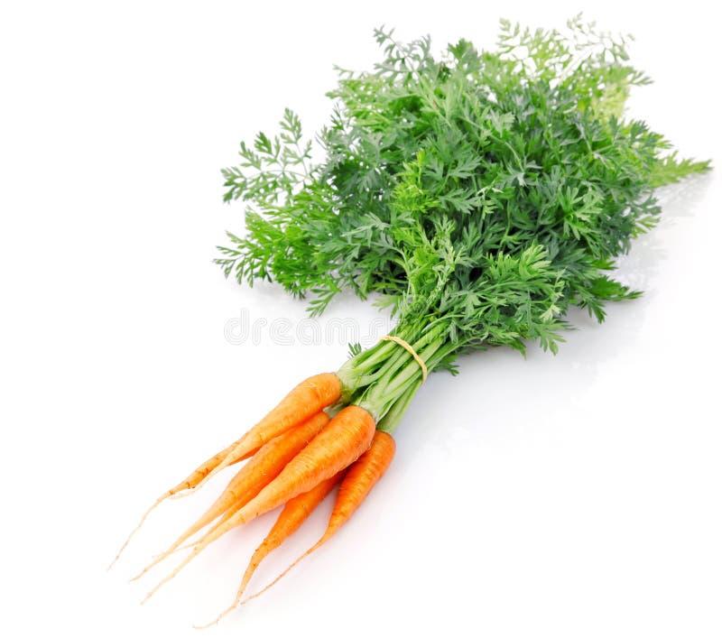 Frische Karottefrüchte mit grünen Blättern lizenzfreie stockbilder
