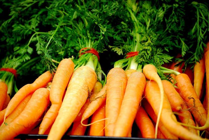 Frische Karotten stockbilder