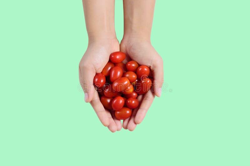 Frische Kirschtomaten in der Hand auf gr?nem Hintergrund stockfoto