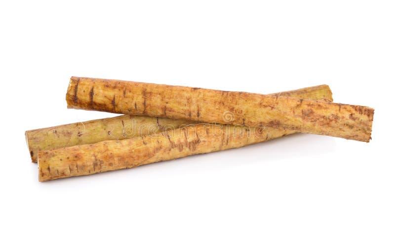 Frische Klette Wurzel oder Gobo auf wei?em Hintergrund lizenzfreies stockfoto