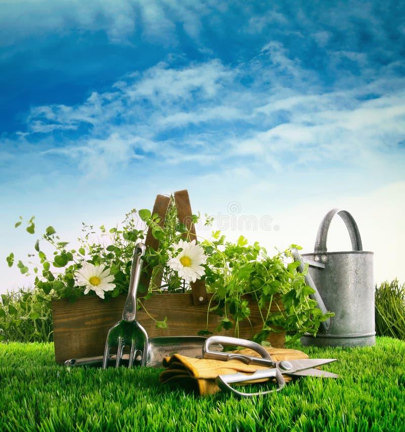 Frische Kräuter und Blumen mit Gartenwerkzeugen im Gras stockfotografie