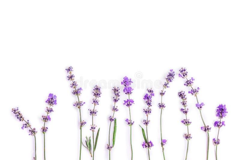 Frische Lavendelblumen auf einem weißen Hintergrund Lavendelblumen verspotten oben Kopieren Sie Platz stockfotografie