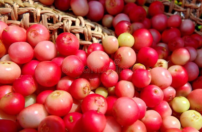 Frische Lingonberries lizenzfreie stockbilder