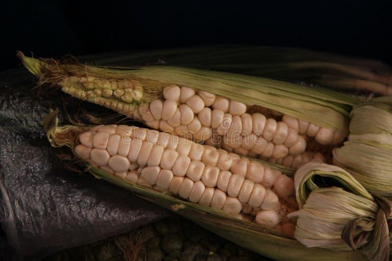 Frische Maiskörner lizenzfreie stockfotos