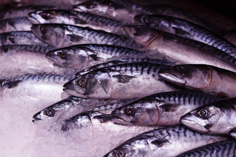 Frische Makrele im Seemarkt für das Grillen oder die Ofenröstung lizenzfreie stockfotografie
