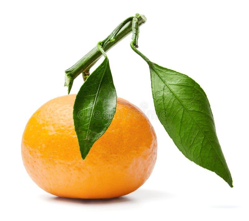 Frische Mandarine auf einer Niederlassung lizenzfreie stockfotografie