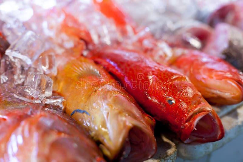 Frische Meeresfrüchte im asiatischen Markt stockbilder