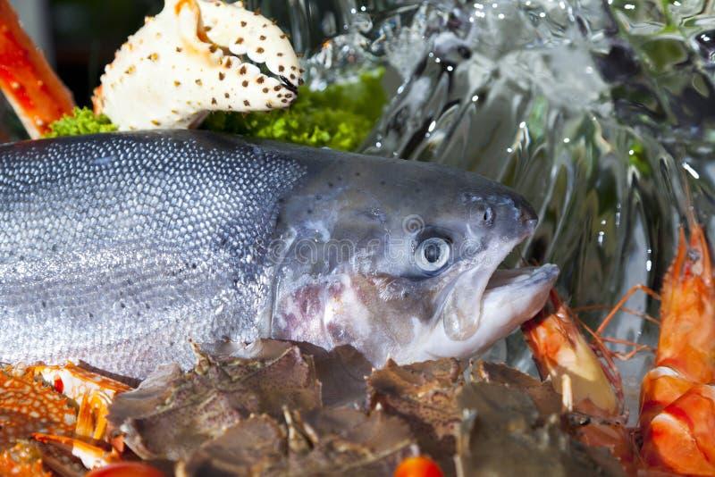 Frische Meeresfrüchte-Zusammenstellung stockfoto