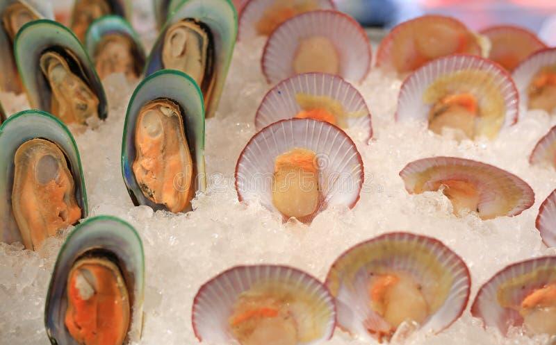 Frische Miesmuscheln und Kammmuschel auf Eis stockfoto