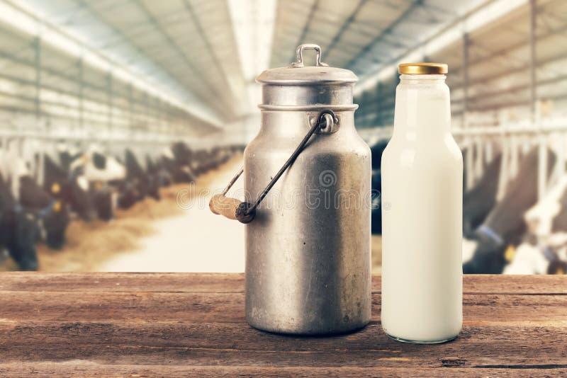 Frische Milchflasche und kann auf dem Tisch im Kuhstall lizenzfreies stockbild