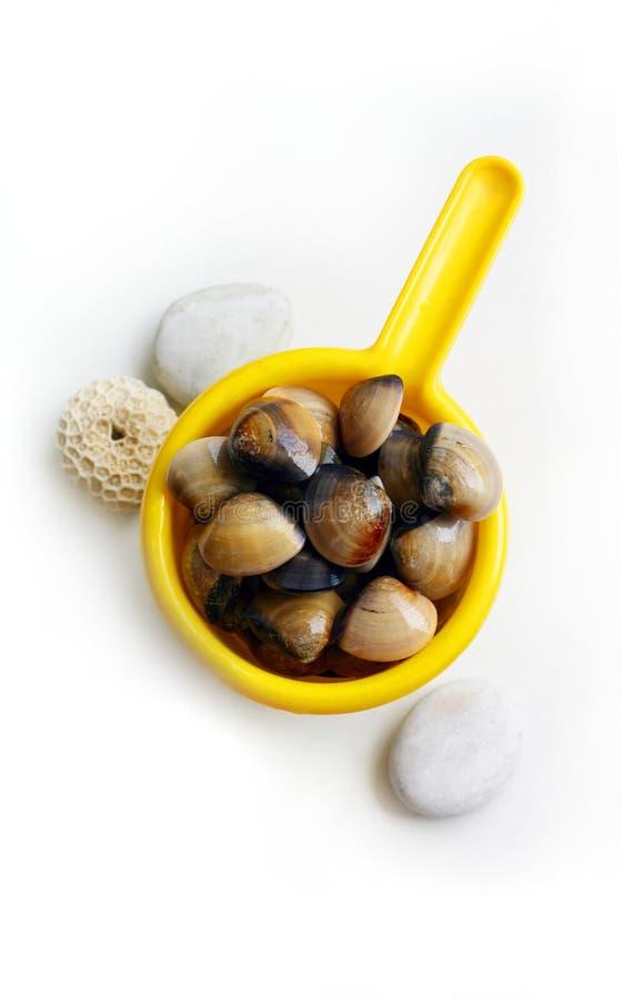 Frische Muscheln - Fang des Tages lizenzfreies stockbild
