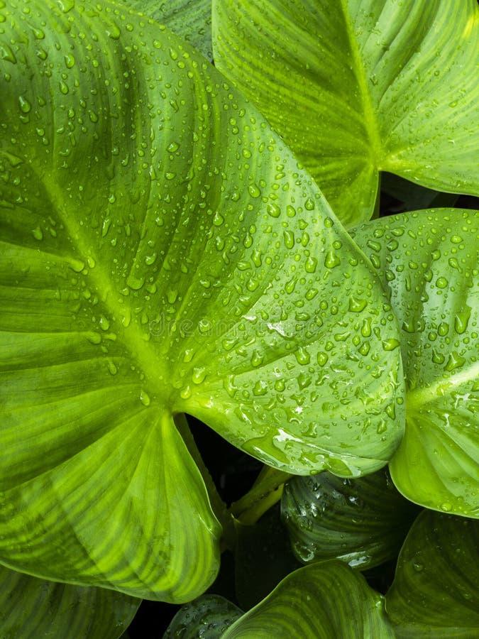 Frische, nachdem des Regnens stockbild