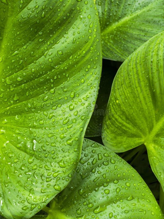 Frische, nachdem des Regnens stockfotos