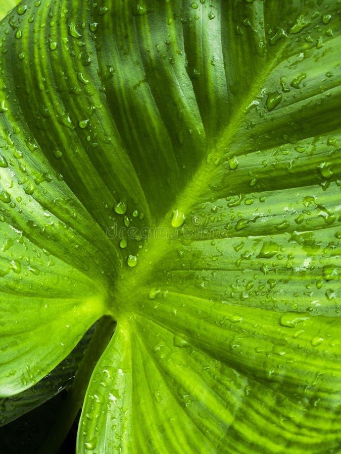 Frische, nachdem des Regnens lizenzfreie stockbilder