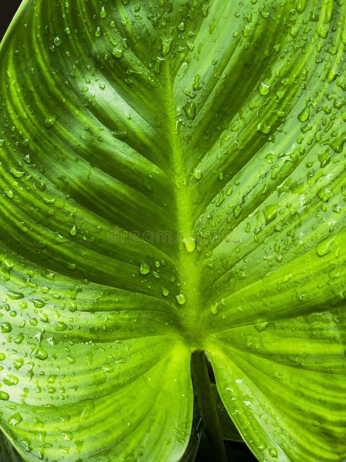 Frische, nachdem des Regnens stockfotografie