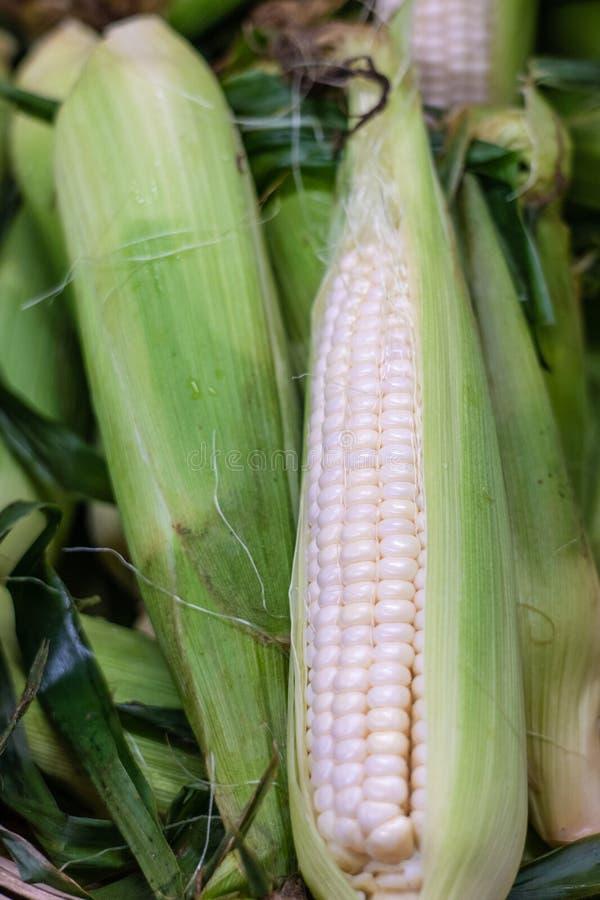 Frische Ohren des weißen Mais stockfotografie