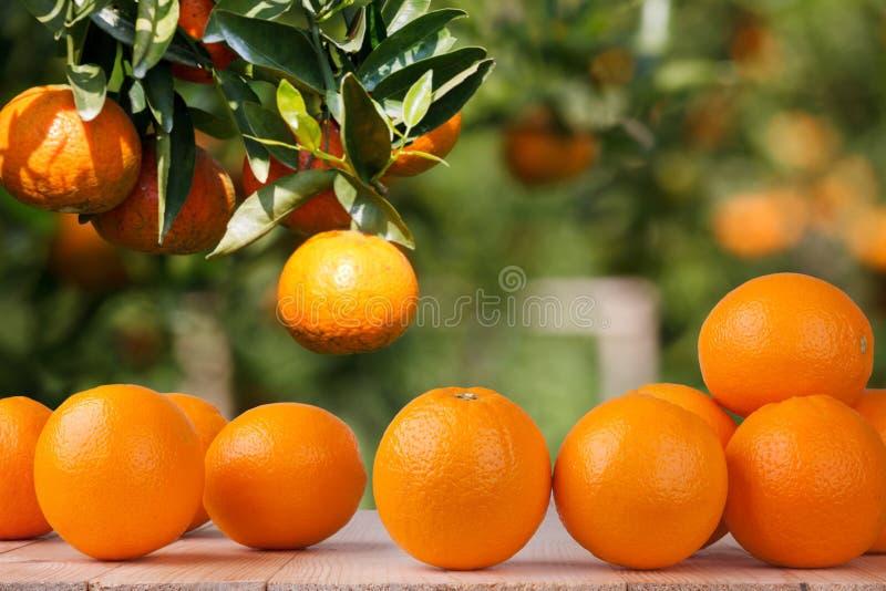 Frische Orange auf hölzerner Tabelle im Garten lizenzfreie stockbilder