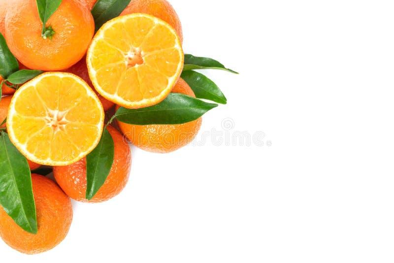 Frische orange Früchte stockbild