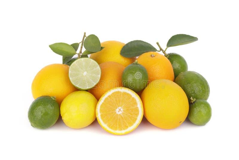 Frische Orange und Zitrusfrüchte stockfoto