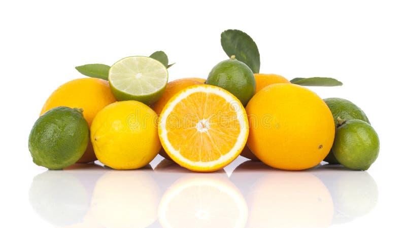 Frische Orange und Zitrusfrüchte stockfotografie